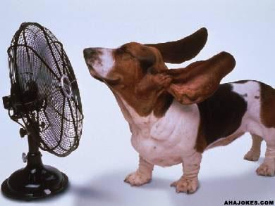 https://happytalesblog.files.wordpress.com/2011/07/dog_ears.jpg?w=300