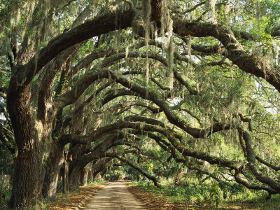 https://happytalesblog.files.wordpress.com/2011/11/maria-stenzel-ancient-live-oak-trees-in-georgia.jpg?w=300